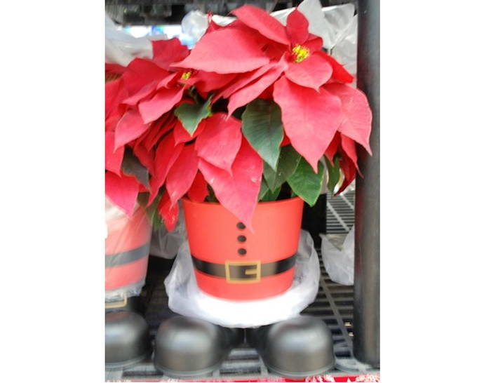Gifts for Her - Poinsettia